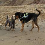 Auch die Hunde geniessen den Strand