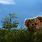 Psst! Da hört jemand das Gras wachsen