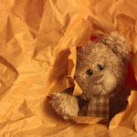 Der Durchbruch! Er hat es wohl echt geschafft, der kleine Bär!?