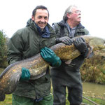 Waller, ein großer Fisch mit einer Handangel geangelt.
