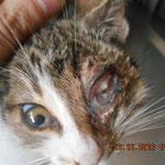 Auswirkungen des Katzenschnupfens!