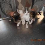 Gleich vier Kitten mit Katzenschnupfen.