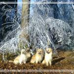 l'hiver approche / es wird Winter