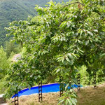 Blick vom oberen Garten zum Pool