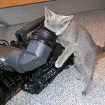 Cinnea wird Kamerafrau.