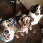 Bei Jester zu Besuch (der Hund meinens Cousains). Jester ist der Groß-Cousain halbseitig zu Peaches. Kaputt vom Spielen. Und Bailey aus dem Schalf geholt ;-)