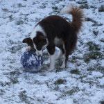 Treibball im Schnee