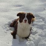 Bailey im Tiefschnee