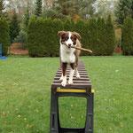 Leiterübung mit Stock, nich meine Idee sondern Baileys ;-)