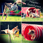 Agility-Collage