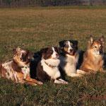 Gassi-Runde mit Pias Hunden (Djego und Ronda)