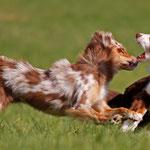 """Meine """"Power-Hunde"""" sie sind einfach klasse, danke Pia für das Bild"""
