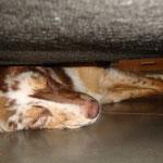 Sie passt zwar mit 9 Mon. kaum noch unter die Couch aber sie liebt es ;-)