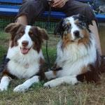 Djego und Bailey ca. 12-13 Mon.