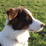 Bailey 6 Mon. im Profil