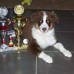 Ihre ersten Pokale bei einer Ausstellung im August ca. 3 Mon.