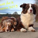Meine beiden Aussies Ende 2013