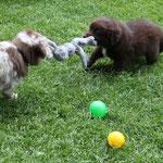 Spiel mit ihrem Bruder