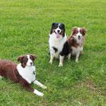Bailey mit 1 Jahr zu Besuch bei Mama und Papa (Brombach See)