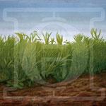 Gräser auf Wildseide