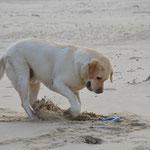 hat Spaß am Strand