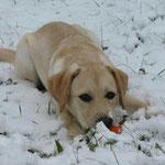Milo genießt den Schnee :-)
