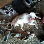 """""""klein Luna"""" liebt Schuhe :-)"""