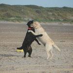 """Ausgelassene Hunde sind lebendig gewordene Lebensfreude"" - Nina Sandmann"