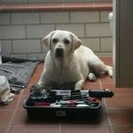 man (Hund) hilft wo er kann