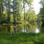 Fino konnte leider nicht dabei sein und schickt Grüße aus dem Spreewald :-)