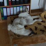 ... Schlafposition eindeutig von Mama Luna geerbt! :-)