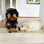 Paul und Bruno