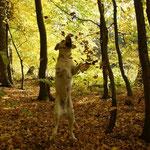 Moony genießt den Herbst