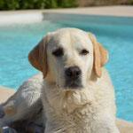 Casper...wieder einmal Fotos von Mallorca, Danke an Patricia