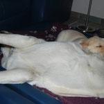 und schläft dann tief auf Tante Luna :-)