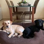 Ruby und Sutton