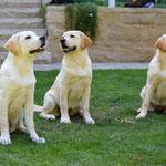 Dexter, Maple und Lotte