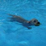 Casper im Pool