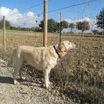 Casper auf Mallorca :-)