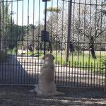 ...Casper wartet - samt Stofftier :-) - auf sein Herrchen
