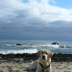 Fino (Mia x Micah) macht Urlaub am Meer