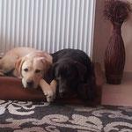 gesucht und gefunden - Zazou und Nala :-)