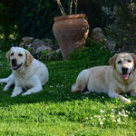 Frühling auf Mallorca- Casper und Lola :-)