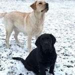 Hazel und Frieda