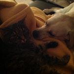 Trixie und Maja :-)