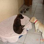 Lotti mit Freundin Ella