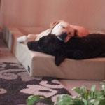 Zazou und Nali :-)