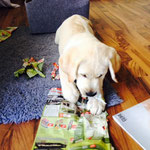 Bruno lernt jetzt Lesen :-)