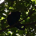 Uno de los monos... lo despertó el viento.