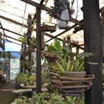 Invernadero de orquídeas